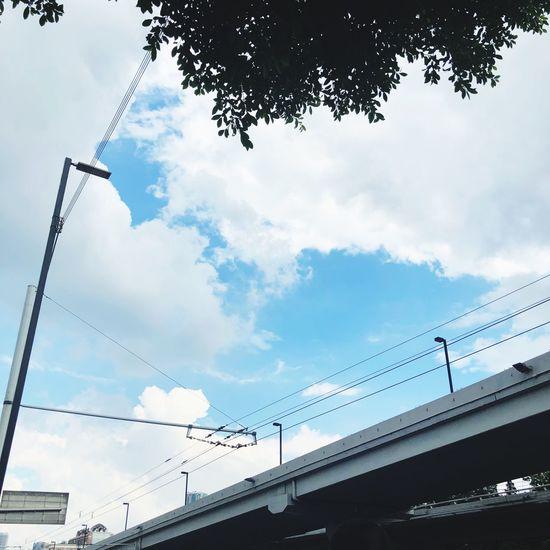 颱風過後 Low Angle View Cloud - Sky Tree Nature Plant Cable