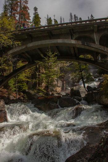 Arch bridge over river against trees