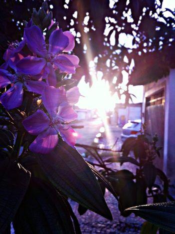 Por do sol Flowers Sunset_collection Walking Around
