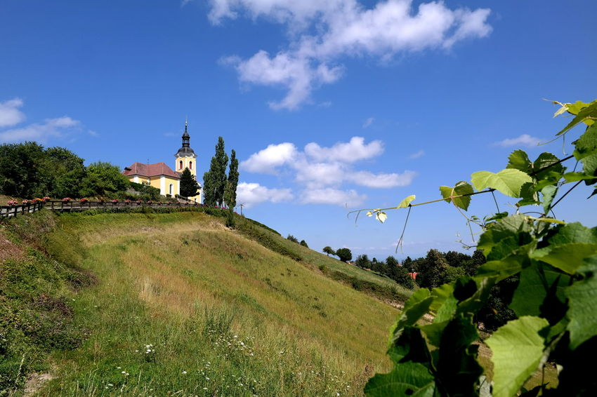 Austria ❤ Blue Sky White Clouds Church EyeEm Best Shots EyeEm Nature Lover EyeEm Gallery EyeEmBestPics From My Point Of View Green Color Landscape_Collection Steiermark The Week On EyeEm Vine 🍷 Beauty In Nature Blue Sky Built Structure Eye4photography  Green Color Growth Kitzeck Landscape_photography Styria 💚 Südsteiermark Vineyard Weinstraße