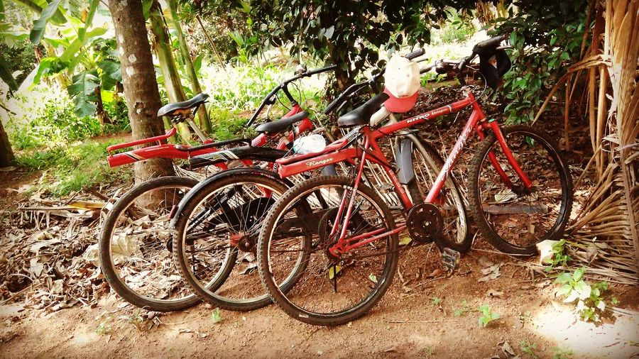 Ride... Ride Or Die BikerBoy Photooftheday Freinds <3 Love Bicycle Day Outdoors Transportation Mode Of Transport Land Vehicle Stationary No People Tree Bicycle Rack Nature Let's Go. Together.