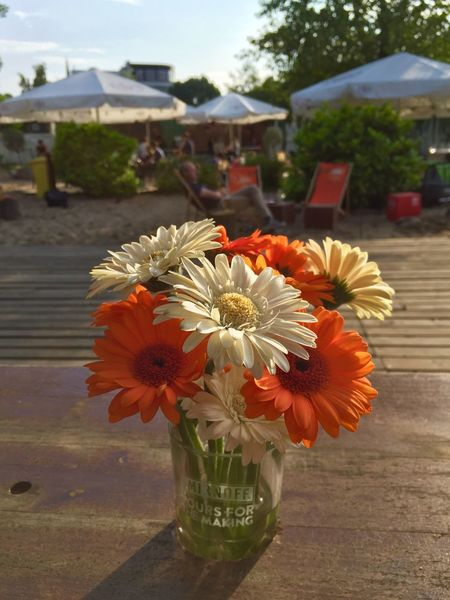 Welcome summer! Or... the first evening of the year at the beach club ☺️ Summer Summertime Beach Club Evening Flowers Hamburg Hamburgcity Gerbera Orange Orange Color Orange Flower People Sun Sunny Day Sunny The Essence Of Summer The Street Photographer - 2016 EyeEm Awards
