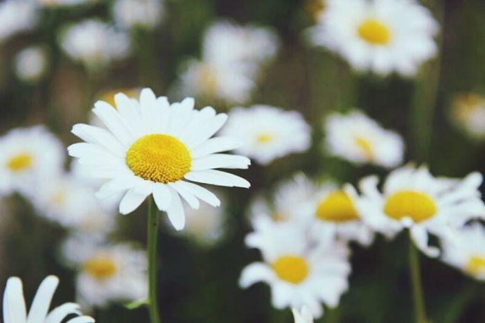 꽃 Epuegraphic