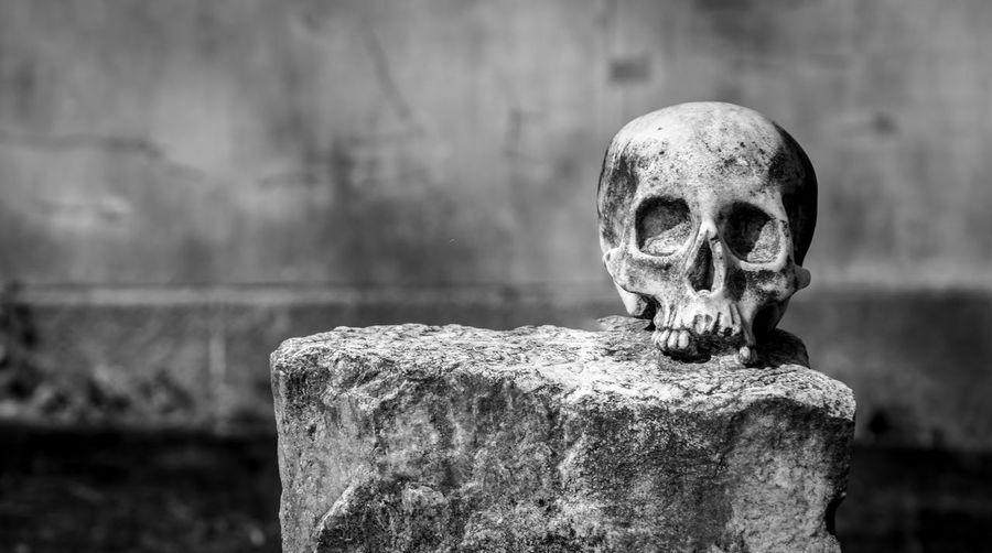 Close-up of damaged human skull on rock