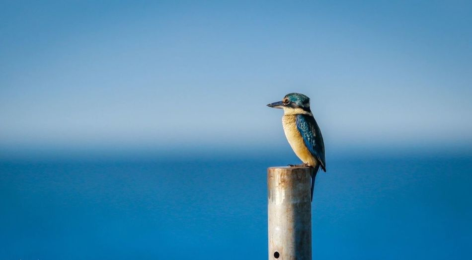 Side view of bird perching on metallic pole against blue sky