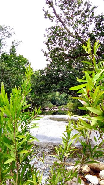Beauty In Nature Freshness No People Growth Outdoors Natural Colours Tranquility River Natural Light Natural Photography Rainforest Australia