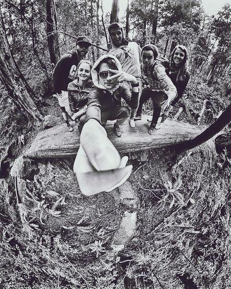 Ewok squad goals. Redwoods San Francisco Blackandwhite Blackandwhite Photography Black And White 360 Theta360 Muir Woods
