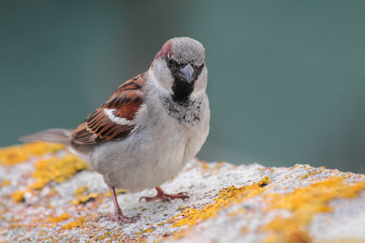 Animal Animal Wildlife Bird Close-up Nature One Animal Selective Focus Sparrow