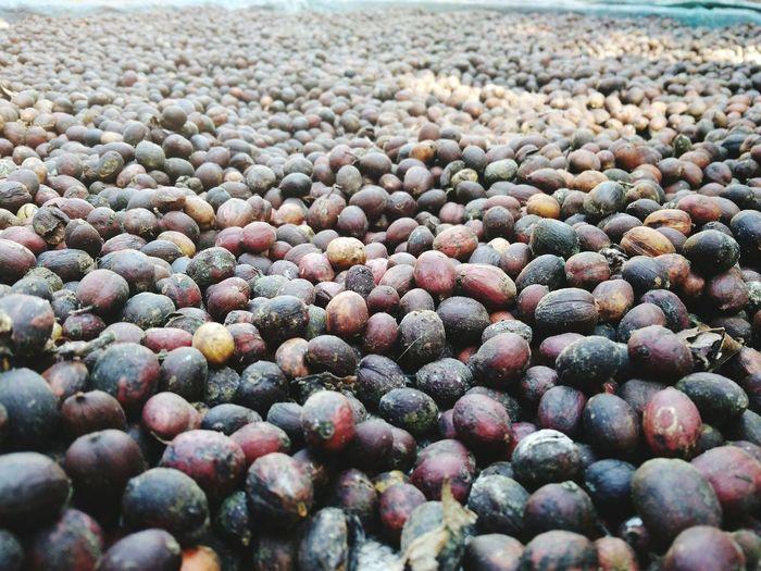 EyeEm Selects coffee beans No People NTB Rumahalir Lombok Island DELTA API Nature