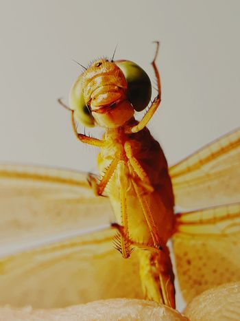 i dont harm you EyeEm Selects Insect Close-up Animal Themes Dragonfly Animal Leg