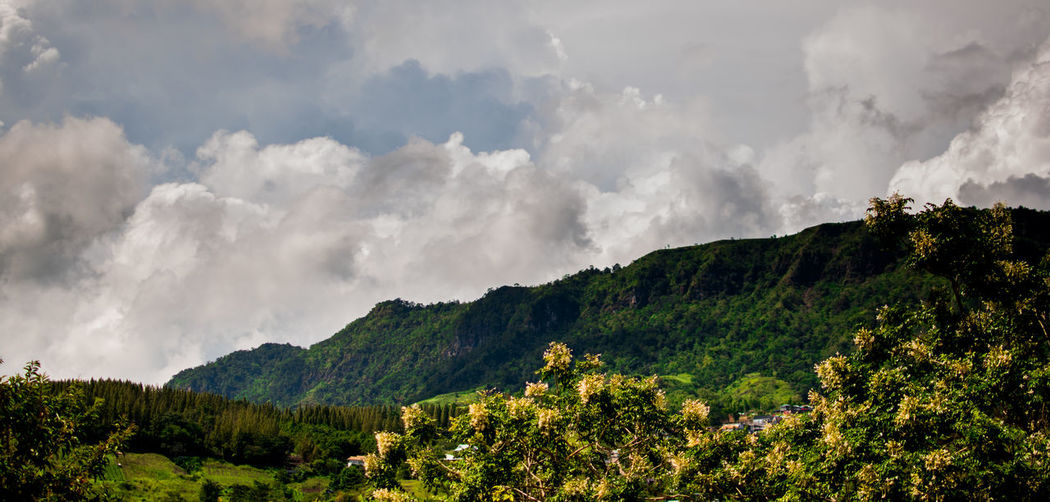 Cloud - Sky Beauty In Nature Plant Scenics - Nature Environment Tree Mountain Sky Nature No People Tranquility Tranquil Scene Day Non-urban Scene Land Landscape Smoke - Physical Structure Growth Green Color Outdoors Pollution Power In Nature Air Pollution