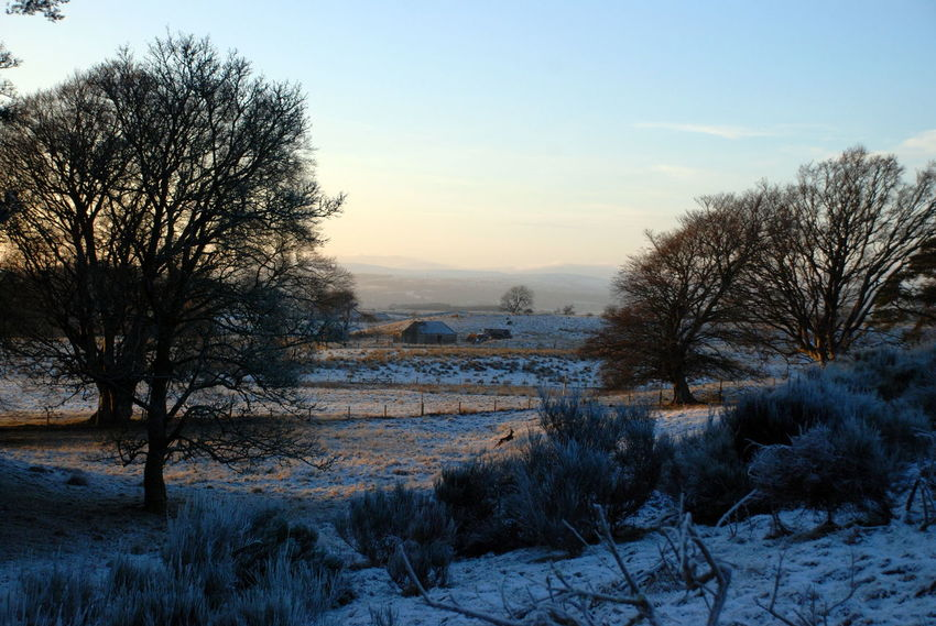 Freezing Cold January Perthshire, Scotland Winter Light Bare Tree Beauty In Nature Clear Sky Cold Temperature Day Field Landscape Nature No People Outdoors Roe Deer Scenics Sky Snow Sunset Tranquil Scene Tranquility Tree Winter
