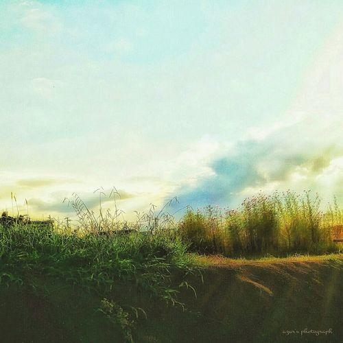 すぐ側にある風景Sky Nature Outdoors No People Grass Day Beauty In Nature Taking Photos Riverbank Smartphone Smartphone Photography Beauty In Nature Flower 秋桜 秋の風景
