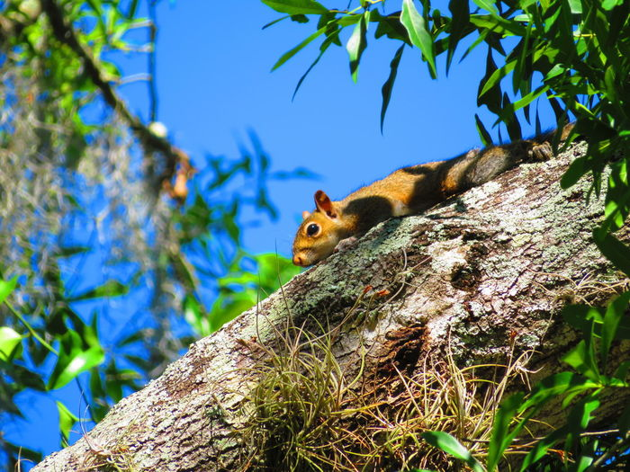 Squirrel resting on branch Colorful Nature Florida Tree Branch Squirrel Tree Trunk Close-up