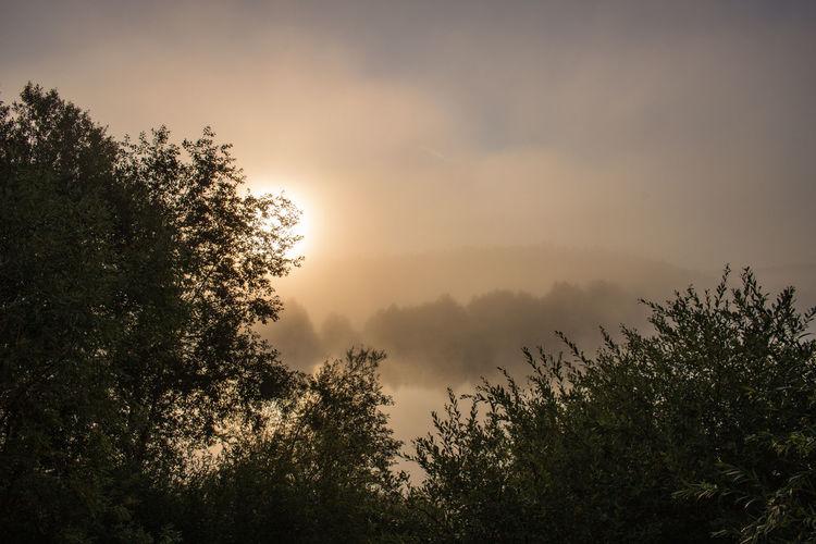 Nebelmorgen im