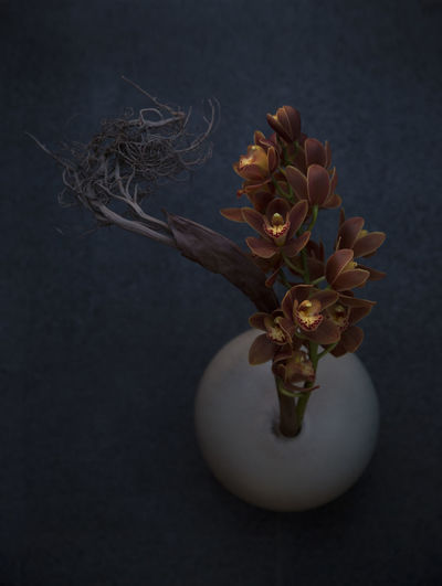 High angle view of flowering plant in vase