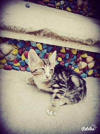 MyLittleCat 💕 🐱 Playing With The Animals Mygarden:) Animal Photography Little Candy Cat♡ Home Sweet Home Socute💕 Happysummer