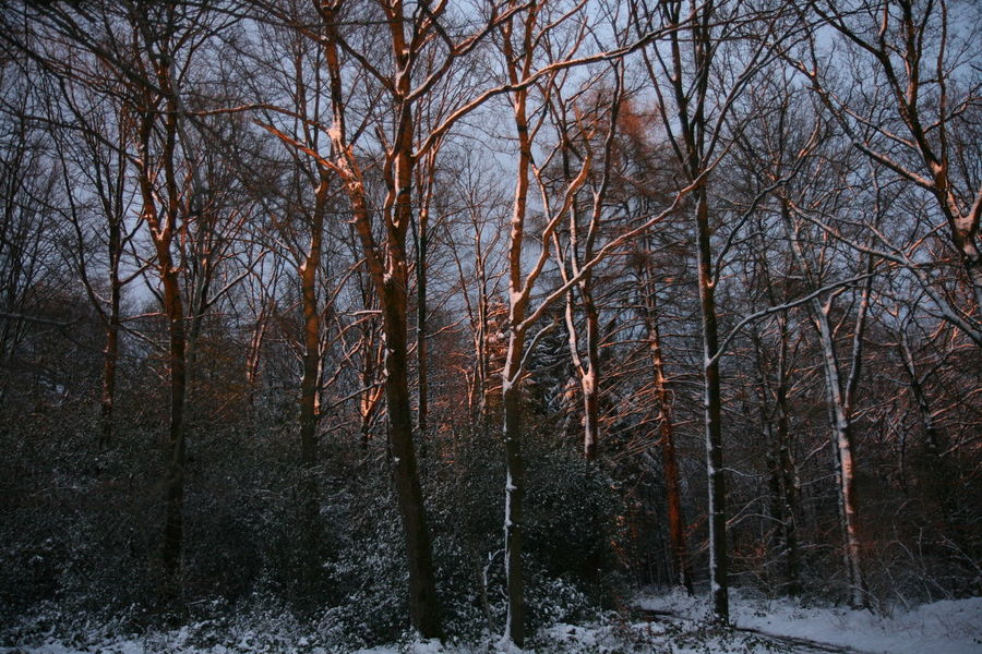 Jalhay-Sart Fagnes Forest Snow Sunfire Tree Tree Sunset Winter
