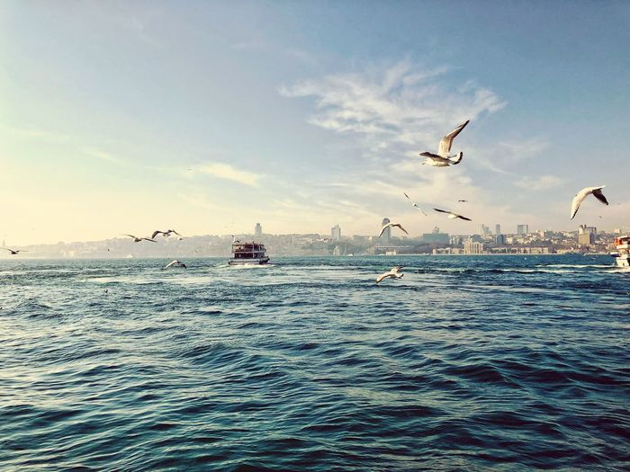 Destination Boat Cloud Travel Bhosphorus Bosphorus Turkey Istanbul Seagull Sea Water Flying Sky Sea Animal Themes Animal Vertebrate Nature Bird Day Transportation Outdoors