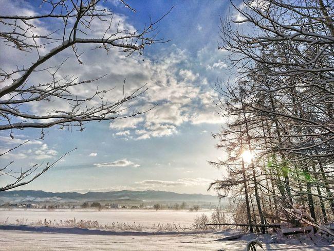 ✨🌲❄️ Sunrise 朝日 朝陽 Black_chica1801 Winter Winter Wonderland Snow ❄ Snow Nature Nature Photography Tree Trees 北海道 Hokkaido 田舎暮らし Sky Nature Water Sea Beauty In Nature Outdoors Tree Scenics No People Day Shades Of Winter EyeEmNewHere