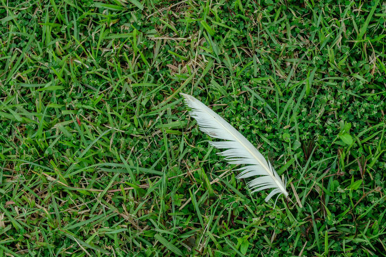 High angle view of feather on field