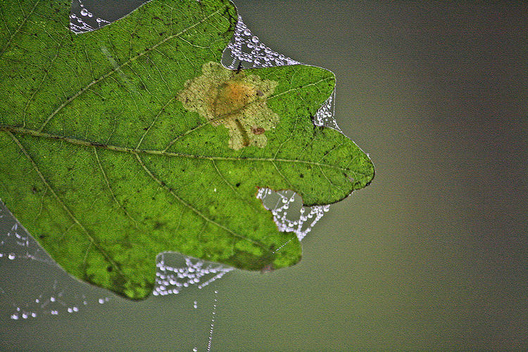 Close-up of fresh green leaf in water