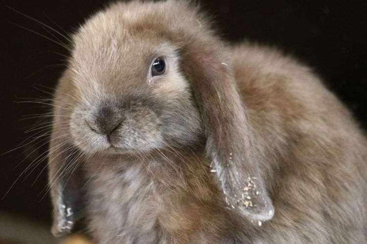 Close-up of a rabbit
