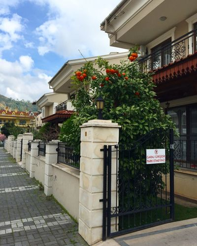 Entrance to a beautiful house where an orange tree is growing Appartment Beautiful Blog Cloud - Sky Flat Flower Garden Gate House Marmaris Nature Nature_collection No People Orange Tree Oranges Real Estate Residence Spring Street Tourism Tourist Travel Travel Blog Travel Destinations Turkey