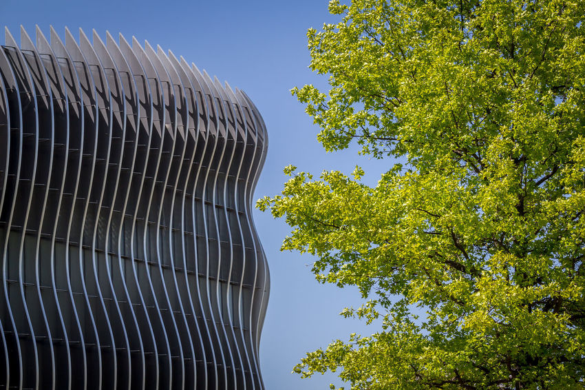 Composition Nature Architecture Building Exterior Built Structure City Clear Sky Day Growth Harmony Low Angle View Modern No People Outdoors Sky Tree The Graphic City