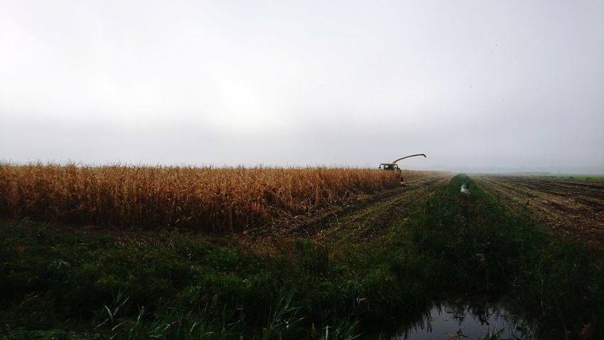 Groene Hart corn harvest by a yellow machine Agriculture Nature Field Fog Rural Scene Landscape European Union Farmlandscape Yellow Paint The Town Yellow Machine Farm Farmland Farming Food Production Scenics The Week On EyeEm Groene Hart Agriculture Outdoors Foodism Growth Sky Day