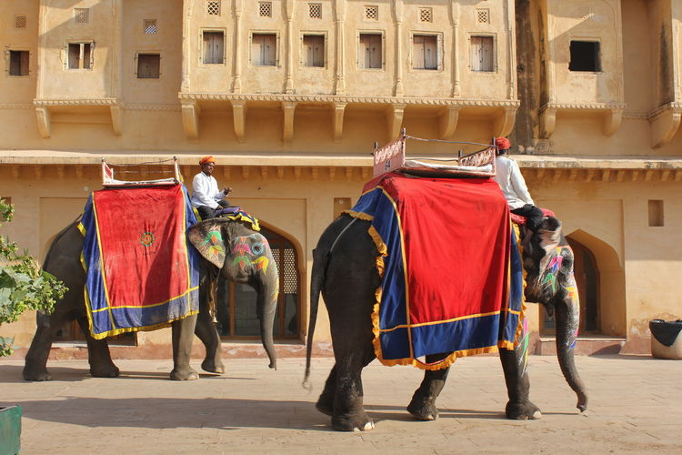 Elephant decorated at Amber Fort in Jaipur, India India Jaipur Amber Fort Animal Animal Decoration Animal Photography Animal Themes Day Decorated Animal Domestic Animals Elephant Elephant Calf Elephants Mammal Outdoors Riding Traditional Festival Two Animals Two Elephants