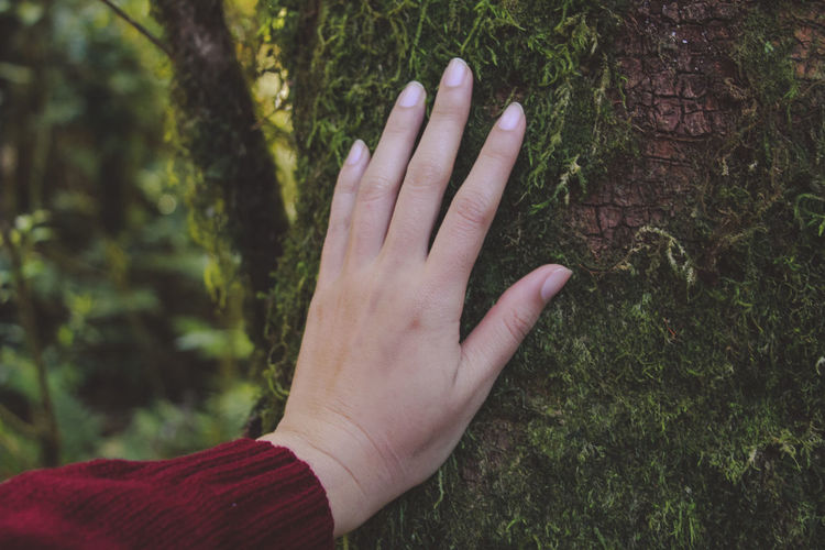 Cropped image of person touching tree trunk at forest