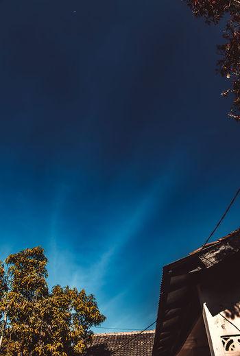 daylight Tree