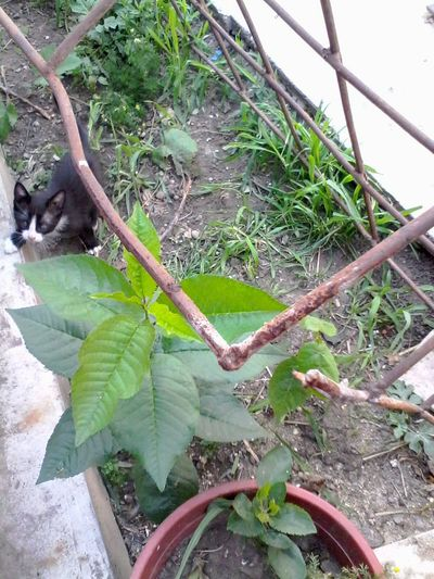 Kitten Cute Pet :-) Gardening ;-) :-P Wolfzuachis Cat Eyeem Market Green Plants Metal Fence Rugged Grass Ruggine Rotten 😚 😚