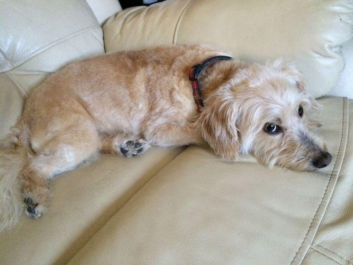Canine Dog Animal Themes Mammal Pets One Animal Animal