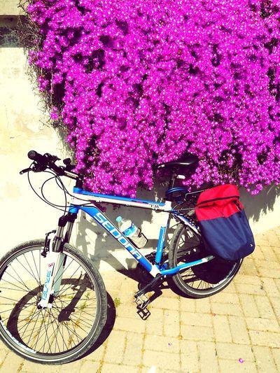 Bicycle Outdoors Relaxing Citylife,bikelife Travel Destinations Konstantinapolis City Modasahil Moda Deniz Kulubu