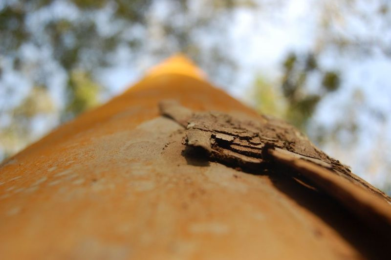 No People Selective Focus Close-up Day Metal Tree Low Angle View Nature Outdoors Invertebrate Rusty Insect Focus On Foreground Textured  Tree Trunk Old Wood - Material Animal Animal Themes Weathered