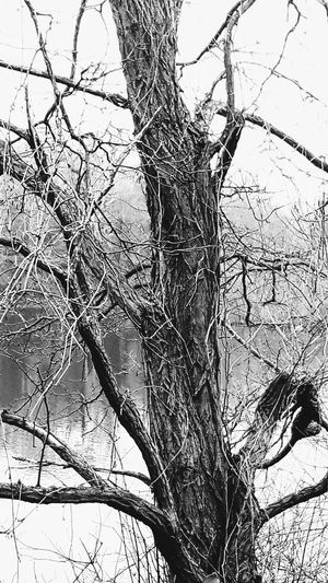 Dried Tree Broken Branches Wintertime Winter Trees At The Lake Blackandwhite Photography My Black & White World EyeEm Gallery Eye4photography
