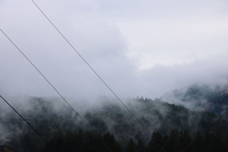 Clouds of fog atop of mountain Sky Fog Tree Nature Cloud - Sky No People Tranquility Beauty In Nature Low Angle View Day Forest Environment Land Silhouette Tranquil Scene Outdoors Growth Scenics - Nature Plant