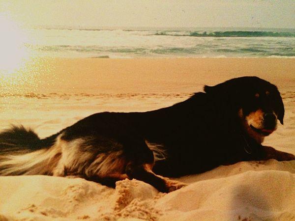 This dog ´s Masia 💜💜💜
