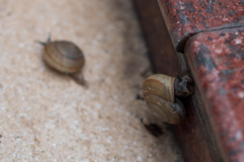 Animal Shell Snail Twin Snail