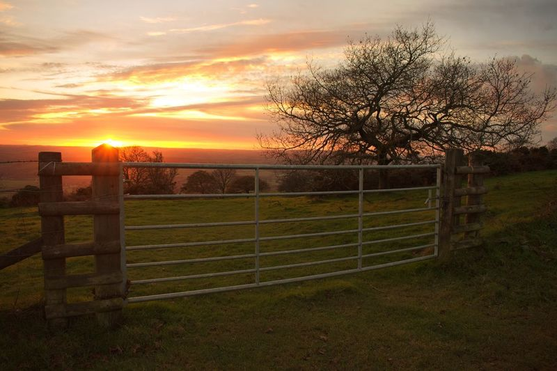 Grass Beauty In Nature Nature Sunset Tranquility Tree No People Protection Gate Tranquil Scene Sky Scenics Field Landscape Rural Scene Outdoors Day