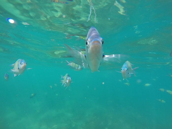 Hello? Animal Themes Swimming Animals In The Wild Water Animal Wildlife Nature Underwater No People UnderSea Sea Life