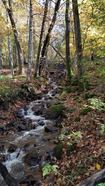 Steam through the woods Fall Time Autumn Beauty In Nature Branch Day Forest Growth Landscape Nature No People Outdoors Scenics Tranquil Scene Tranquility Tree Tree Trunk Water