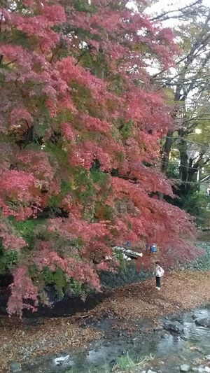 Takao2016 Japan2016 Maple Autumn Colours Takaoautumn2016 Japanautumn2016