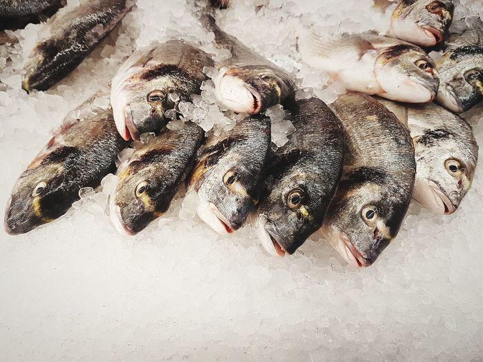 Fisheye EyeEm Selects FishEyeEm Fish Seafoods Frozen Food Animal Head  Sand Prepared Food Fish Market Served Seafood