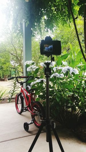 Bicycle Mode Of Transport Day No People Transportation Outdoors Tree Nature Tripod Photography Toys Sommergefühle