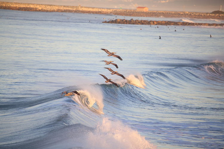 Beach Beauty In Nature Birds Flying In Formation Landscape Nature Outdoors Pelicans In Flight Scenics Sea Spread Wings Wave