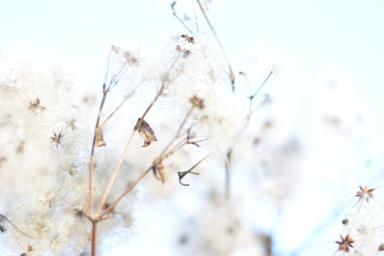 Beauty In Nature Clear Sky Close-up Day Growth Nature No People Outdoors Plant Sky