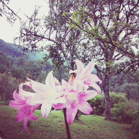 Zacatlán  Puebla Flowers